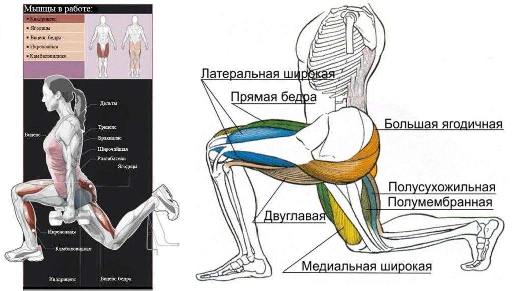 Какие мышцы качают болгарские выпады